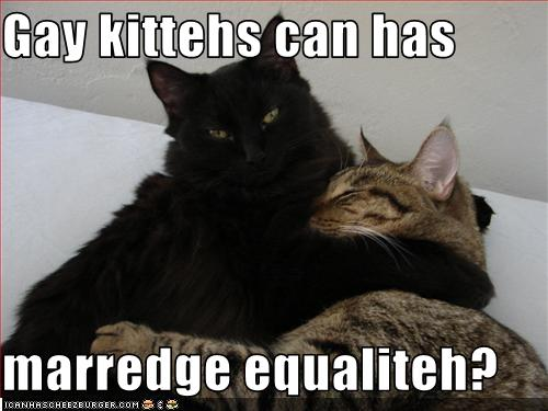 gay_kitties